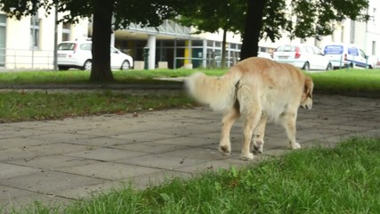 dog walks in the park - street with cars