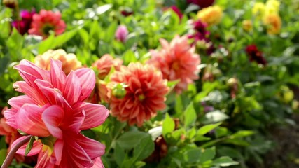 flower garden - a busy urban street in the background