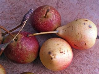 antiche varietà tradizionali di pere italiane