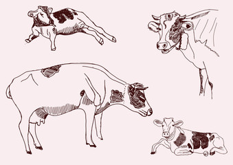 cow. of vector elements