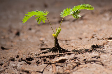 Green sapling growth