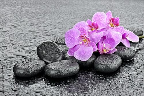Foto op Plexiglas Bestsellers Storczyki na kamieniach bazaltowych