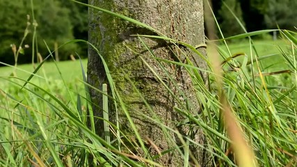 ants creep on the tree (trunk) - grass in the background