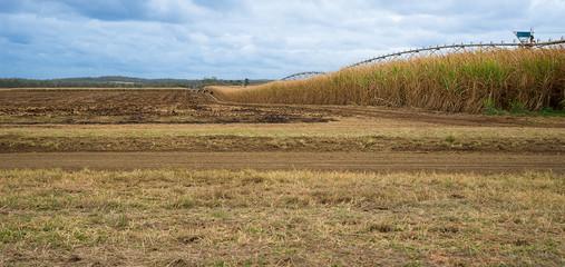 Australian Sugarcane Farm