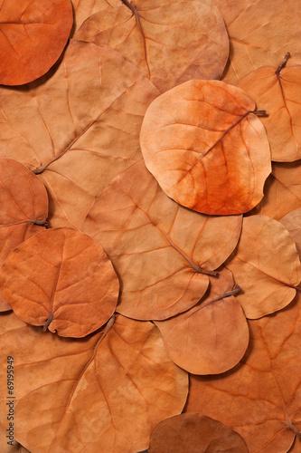 canvas print picture Herbstblätter