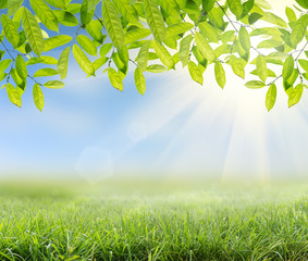 green grass with Green leaves and sunlight