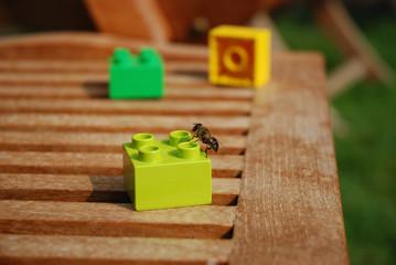 ape confusa