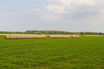 Bales of hay on green field