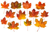 Fototapety Autumn maple leaves collection