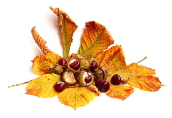 Chestnut nut and leaves