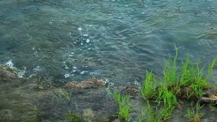 Male Ferruginous duck swimming in river. National park Krka, Cro