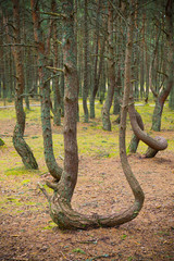 Dancing forest.