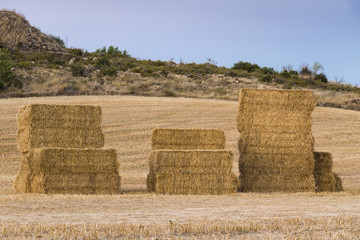 Stacked straw bales on a harvested field