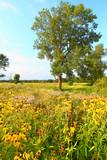 Evening Prairie in Illinois
