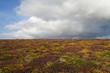 canvas print picture - Wolken über Heide