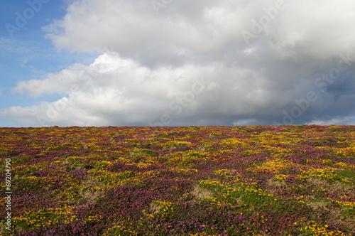 canvas print picture Wolken über Heide
