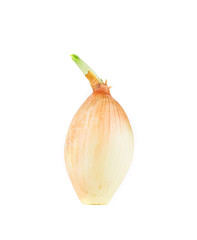 Close up of ripe onion.
