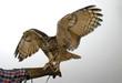 canvas print picture - Eule mit ausgebreiteten Flügeln