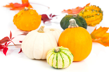 mini pumpkins over white