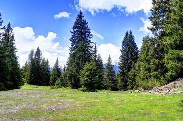 Waldlandschaft - Bichlbach - Kohlspitzberg
