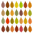 Autumn leaves of different color. Raster