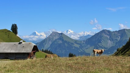 Scenery in the Simmental, farm and Niesen