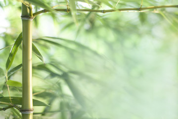 bamboo leaves and twigs with blurred background