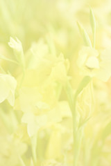 Flower soft focus for nature background.