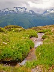 Alps mountain stream in fresh green meadows of mountain.