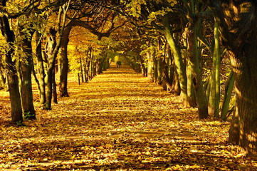Krajobraz wiejski, Jesień