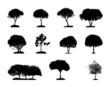 Tree Silhouette Isolated on White Backgorund. Vecrtor Illustrati