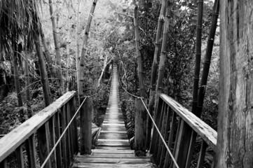 suspension bridge in tropical setting