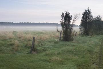 Mgła nad pastwiskiem