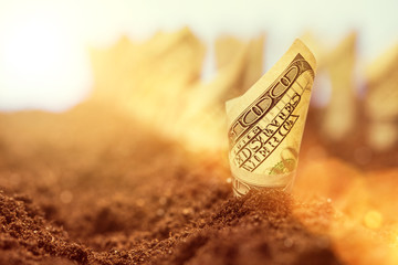 American dollars grow from the ground