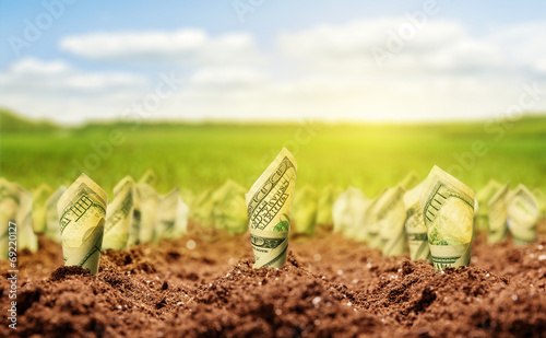 American dollars grow from the ground - 69220127