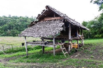 Hut in rice field, countryside in Thailand