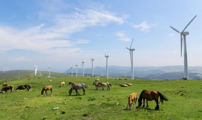 Wind farm in a green field - renewable energy