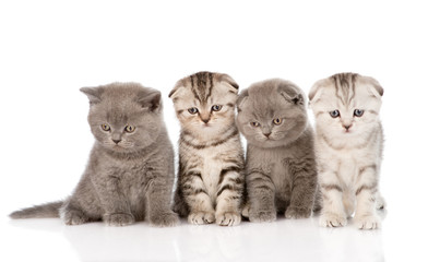 four baby kittens sitting in front. isolated on white background