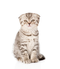 Lop-eared Scottish kitten looking at camera. isolated on white b