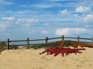Colorful Sand Dunes on Monterey Bay Beach California