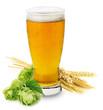 Leinwandbild Motiv Glass of fresh Beer with green Hops and ears of barley isolated