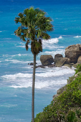 Ocean surf view with palm-tree and stones