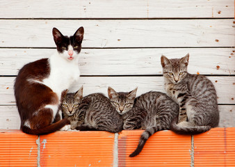 Nice family of cats resting