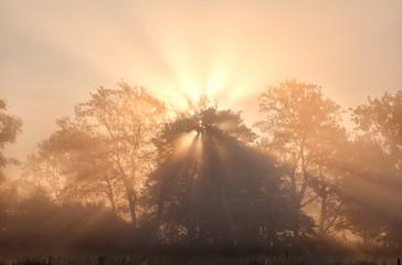 sunbeams in misty morning