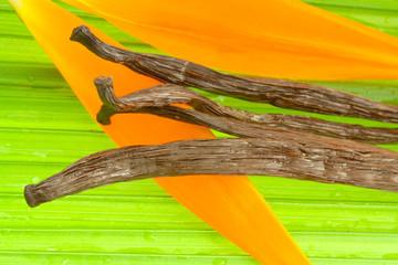 gousses de vanille sur fleur de strelitzia et palmier