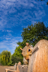 Grey Squirrel close up on a park bench in London