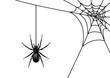 Spinne mit Spinnennetz, schwarz / Vektor / isoliert - 69252544