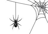 Spinne mit Spinnennetz, schwarz / Vektor / isoliert