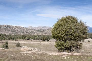 Holm Oak and Juniper dehesa in Madrid, Spain