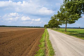 Gravel road through farmland